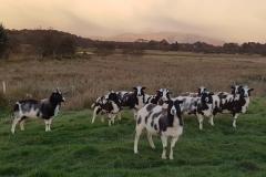 ewes-minus-one-2018