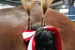 horse tail 20170623_155337