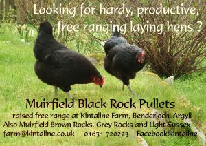 black-rock-pullets-a4-poster-2016