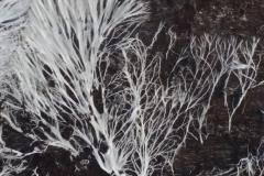 fungi sheet timber 20180319_103501