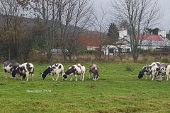 ewes-nov-20201103_085029