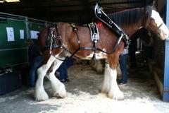 heavy horses 20170623_154704