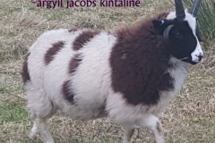 jacob-tup-lamb-4-horn-20191123_090147