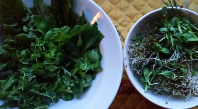 Lettuce rationing – grow your own